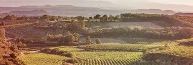 ¡Ganadores de los 5 dorsales de la carrera Rioja Alavesa Wine Run 2016!