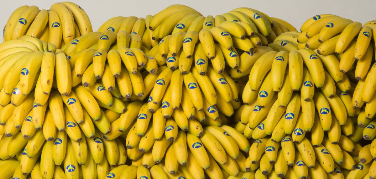 El plátano de Canarias, el mejor alimento para comer antes y después de un entrenamiento, fuente de energía