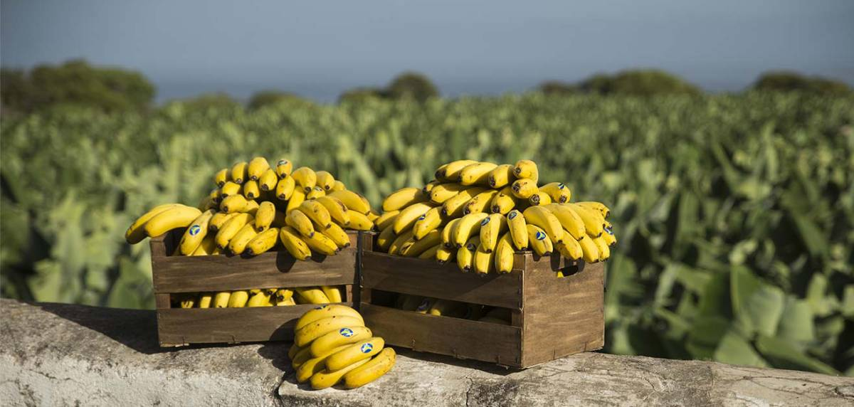 El plátano de Canarias, el mejor alimento para comer antes y después de un entrenamiento, hidratacion
